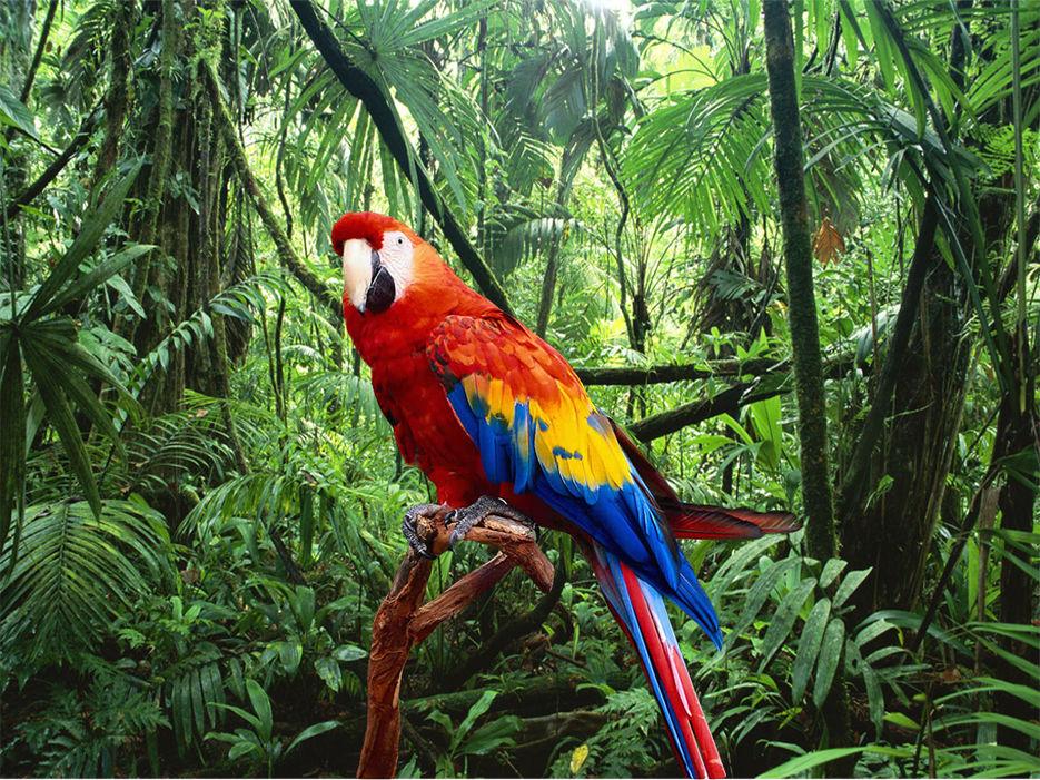 множество картинки попугаев джунглях спрашивайте, почему так
