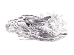 Дельфин афалины