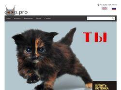 Питомник кошек породы мейн-кун