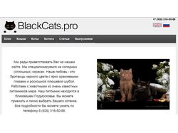 Питомник кошек породы британская короткошерстная