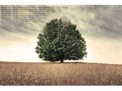 Дерево которое слышит.