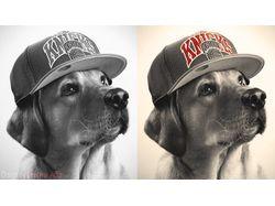Rap Dog.