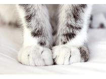 почему кошки переминаются с лапы на лапу