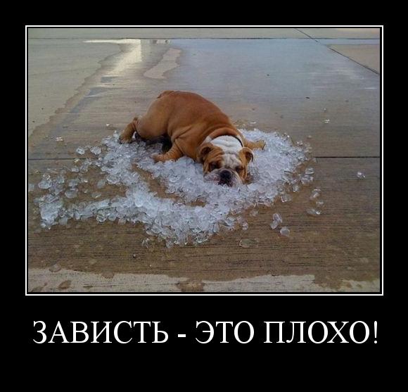 Смешные картинки про лето и жару