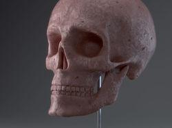 Скульптура черепа