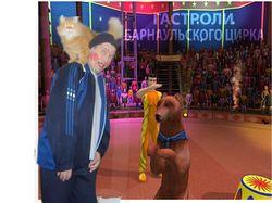мы с кошкой в цирке