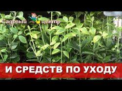 реклама Садового центра