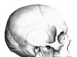 Непарные кости черепа