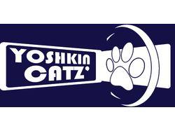 Yoshkin Cat's (команда фризби)