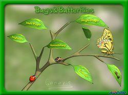 Жуки и Бабочки