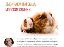 Как выбрать морскую свинку