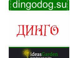 SEO аудит сайта dingodog.su