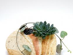 Растение в камне
