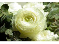 White Flower для презентации студии флористики