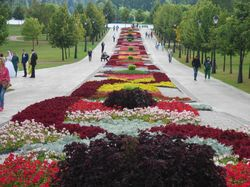Создам проект клумбы,подберу цветочные растения.