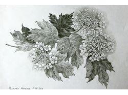 Рисую на заказ Цветы карандашом и тушью.
