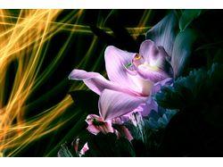 Ночная орхидея