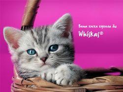 Реклама для whiskas, pedigree