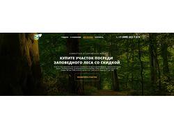 Лесной пейчаж