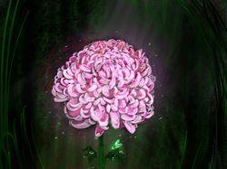 Японская хризантема