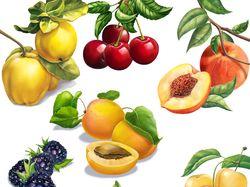 фрукты и овощи для компании Мартин