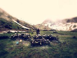 Фото-прогулка и цвето-обработка