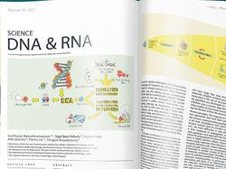 ДНК, РНК и протеины, иллюстрация для журнала
