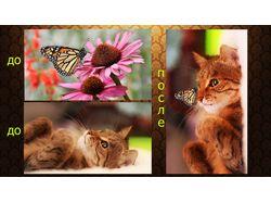 Котик с бабочкой