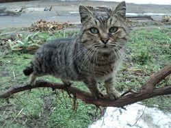 Some cat