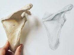 Рисунок лопатки (карандаш) в натуральную величину.