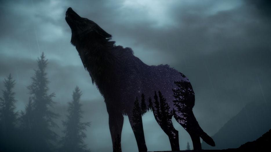 Двойна экспозиция и волка и фона ночного неба со свезами