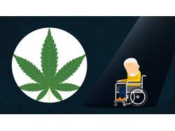 Как марихуана защищает от старости