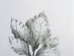 Растительные зарисовки