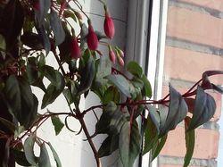 Идеи для цветочных горшков (акрил)