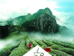 Разработка упаковки и логотипа чая