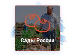 """Сайт """"Сады России""""."""