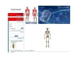 Анатомия человека | Справочник