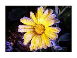 Цветок и лёд