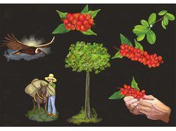 Иллюстрации к брошюре