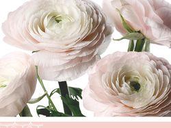 Фирстиль для цветочного магазина