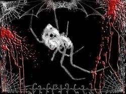 Гнев паука