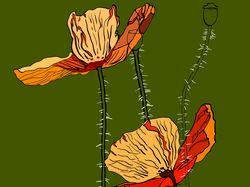 the poppys