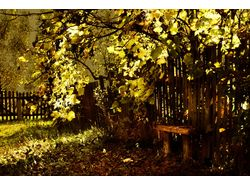 autumn, bench 1