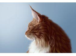 кот портрет