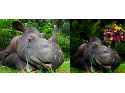 Радостный носорог