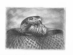 Зарисовка А5 змея