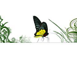 Энтеогены и экзотические растения