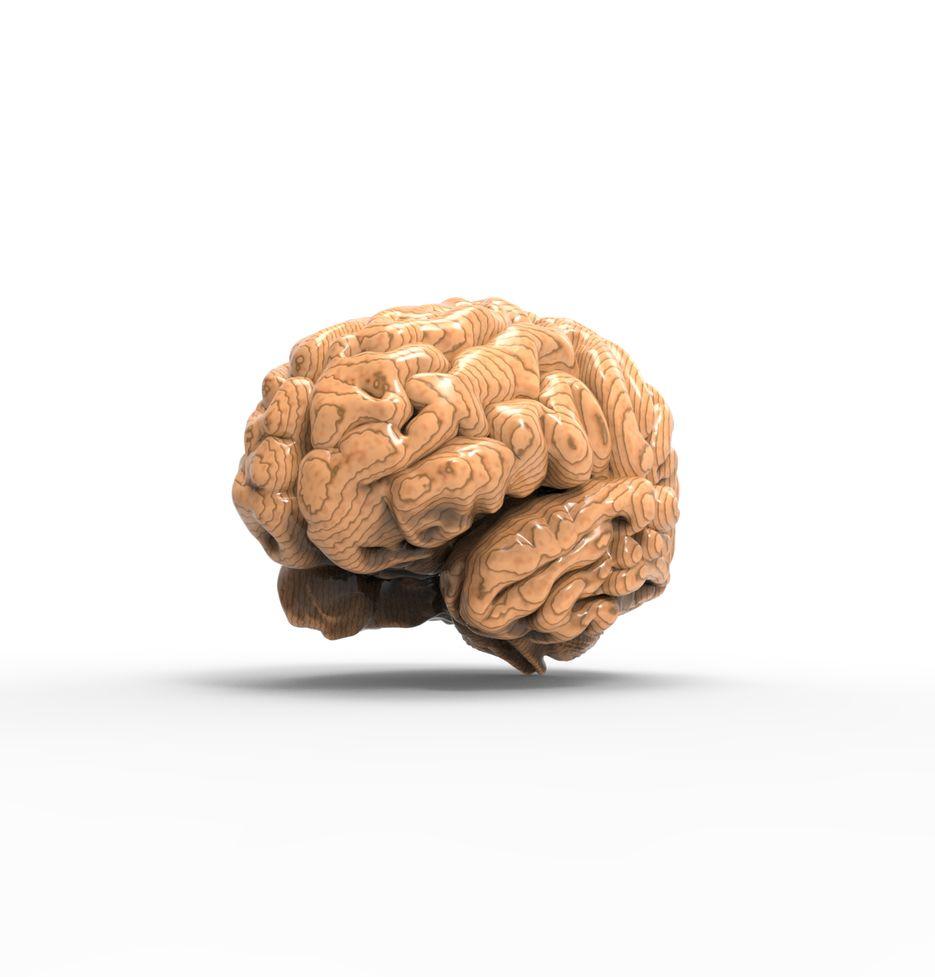Мозг из дерева