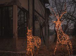 Photoshop. Новогодние олени в парке.