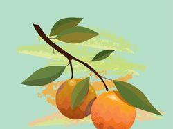 Векторная иллюстрация апельсинов.